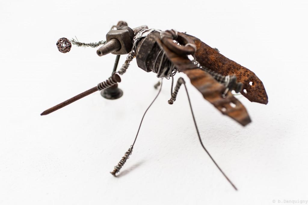 siphonostoma japonensis - Mathieu Antonio Hélio RAPP