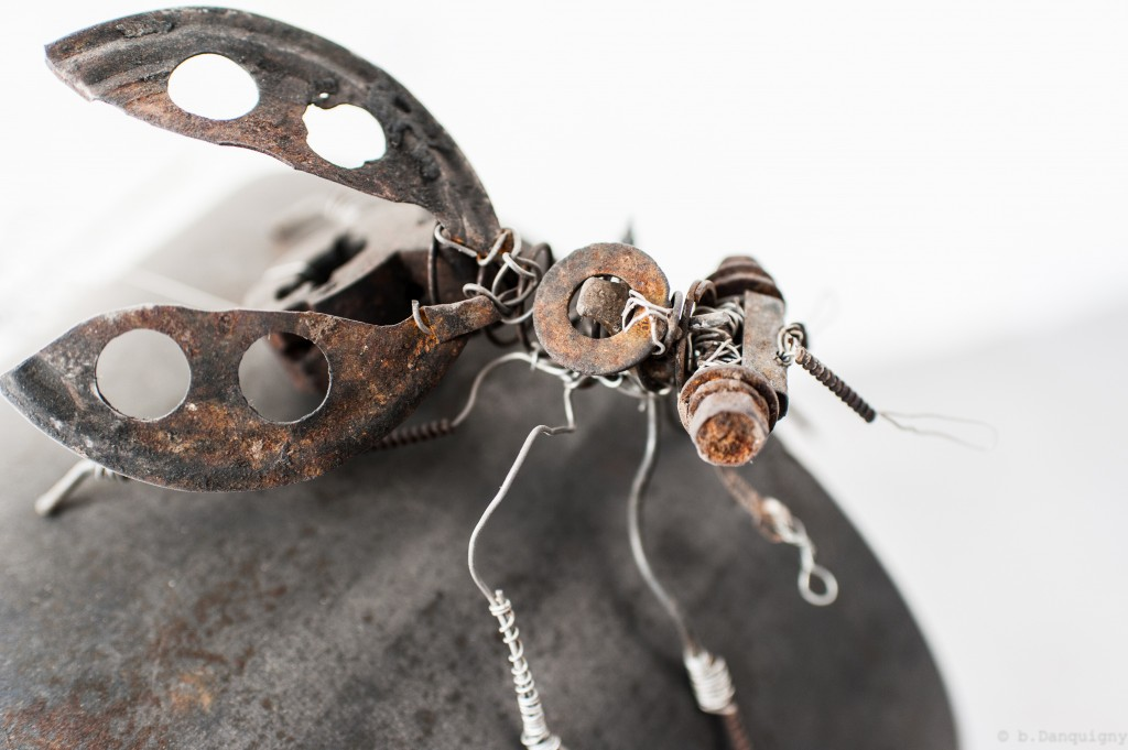 Brevistoma australis - Mathieu Antonio Hélio RAPP