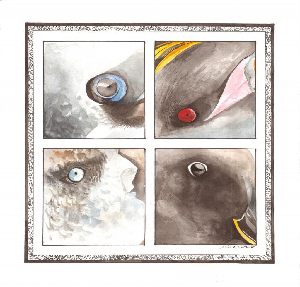 Ornithophthalmie - Mathieu Antonio Hélio RAPP