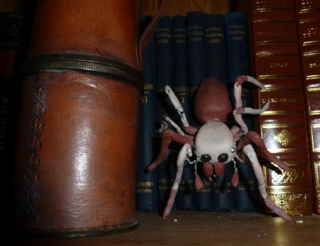 jumping spider - Mathieu Antonio Hélio RAPP