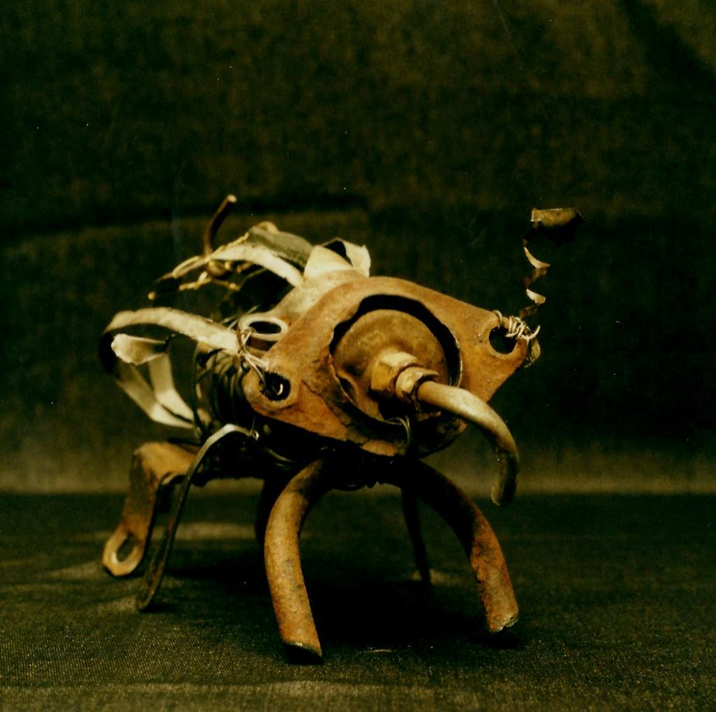 Rimouskorius elephans - Mathieu Antonio Hélio RAPP
