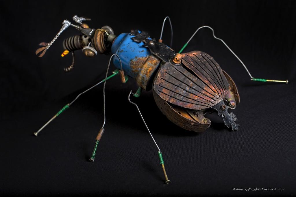Gazophorus cyanothorax - Mathieu Antonio Hélio RAPP