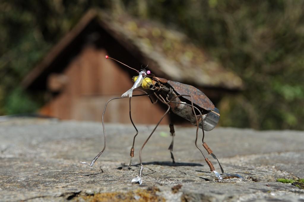 Xanthoptalmus gracilis - Mathieu Antonio Hélio RAPP