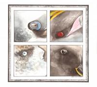 Ornithophthalmie