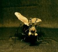 Saintnarcistis muscomorpha