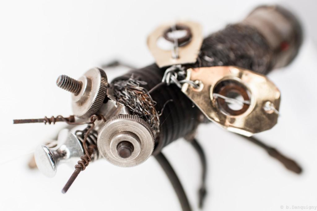 Brachypterus crozetensis - Mathieu Antonio Hélio RAPP